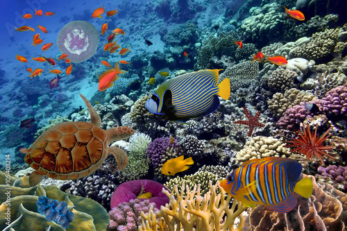 Papiers peints Recifs coralliens Colorful coral reef with many fishes and sea turtle