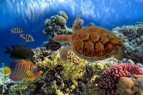 zielone-morze-turtle-chelonia