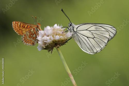 Obraz na plátně  Mariposas en primavera