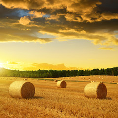Fototapeta Toskania Straw bales on farmland at sunset