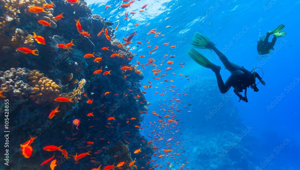 Fototapeta Scuba diver explore a coral reef