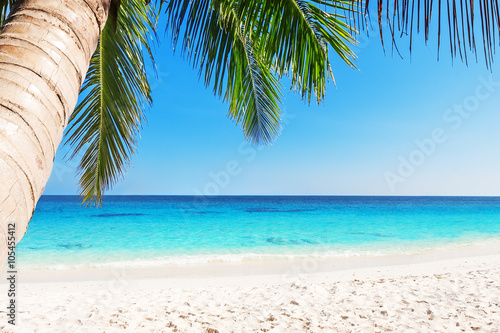 Photo  Tropical white sand beach with palm trees