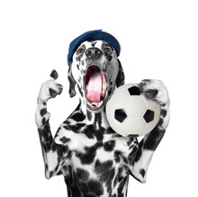 Cute Dog In Cap Holding A Soccer Ball And Shout And Scream