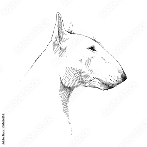 Valokuva Vector sketch of Bull terrier dog head profile isolated on white background