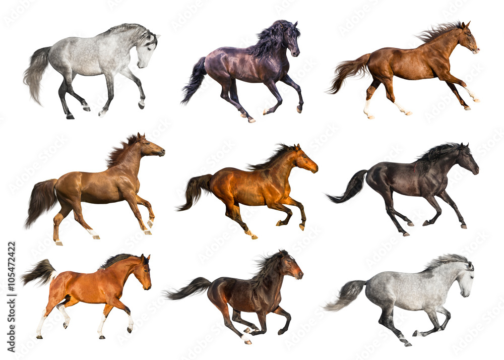 Fototapety, obrazy: Horses collection isolated on the white background