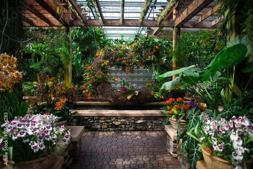 Fotografie, Obraz  Blooming orchids in a beautiful indoor garden