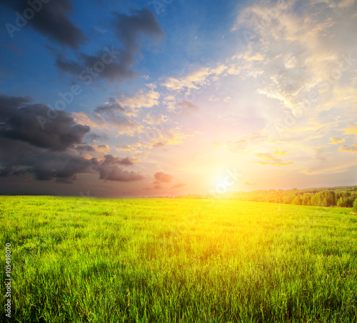 Canvas Prints Honey green field and beautiful sunset