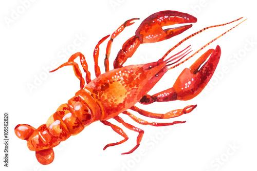Akwarela ilustracja homara