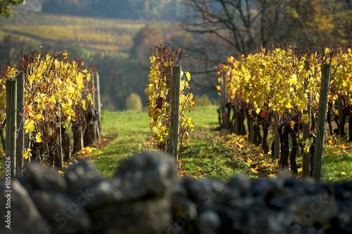 Fotografía Saint-Emilion vineyard in autumn