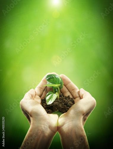Fotografie, Obraz  Holding sapling in soil on hand