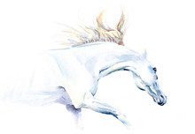 White Horse In Watercolor
