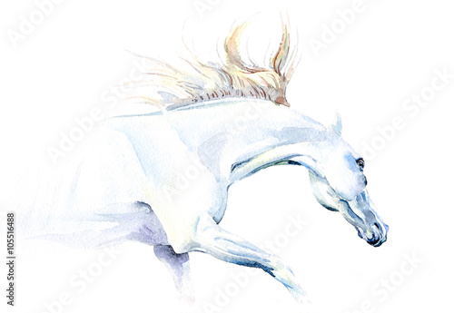 Juliste  White horse in watercolor