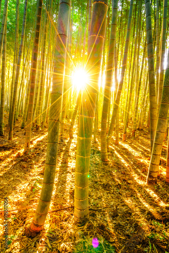 Foto op Plexiglas Bamboe Bamboo forest with sunny in morning