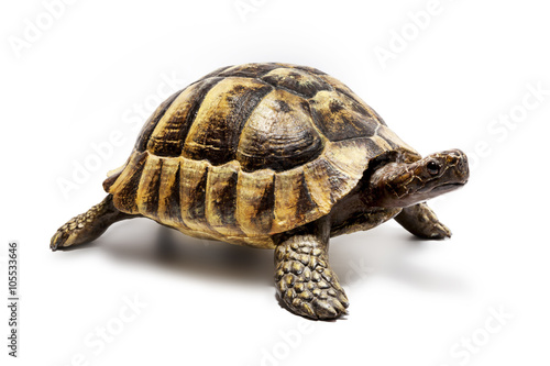 Photo sur Toile Tortue Schildkröte
