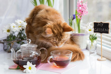 Red Cat Sniffing  Mug Of Tea W...