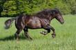 Big beautiful horse running