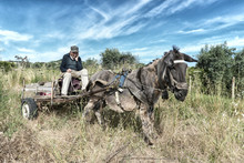 An Old Man On His Cart Pulled By Old Donkey