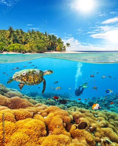 obraz lub plakat Underwater coral reef with scuba diver and turtle