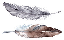 Watercolor Gray Grey Brown Feather Set Isolated