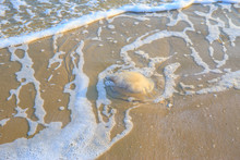 Jellyfish Lying On A Sand Beac...