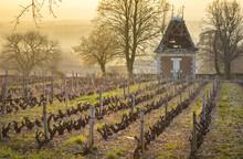 Hut In Vineyards, Beaujolais, France