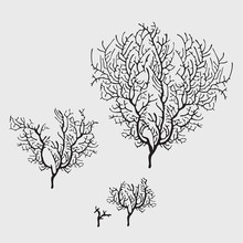Branches Of Black Coral, Stylish Isolated Image