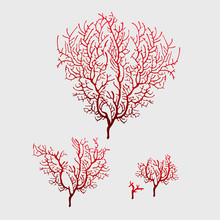 Branches Of Red Coral, Stylish Isolated Image