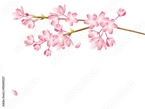 Poster Orchid Spring Cherry blossoms