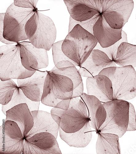 romantyczne-kwiaty-platek-z-bliska