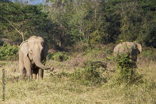 Canvas Prints Elephant Elephant in Chiang Mai, Thailand