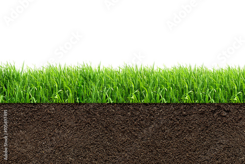 Foto op Plexiglas Gras green grass with in soil isolated on white background