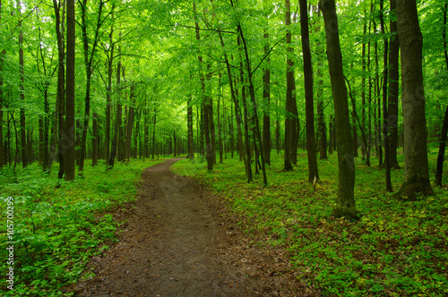 obraz dibond green forest