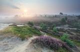kwitnące łąki letnie o wschodzie słońca - 105708651