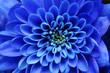Leinwandbild Motiv Details of blue flower for background or texture