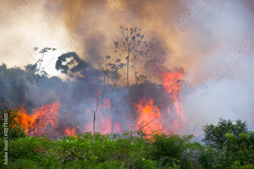 Brazilian Amazon Burning Wallpaper Mural