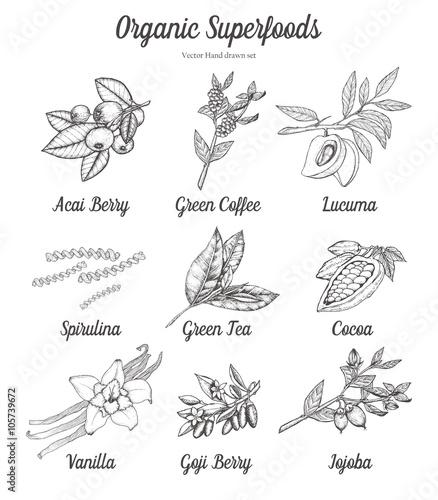 Fotografie, Obraz  Superfood set of acai, goji berry, green coffee, tea, cacao, cocoa, spirulina, lucuma, vanilla, jojoba