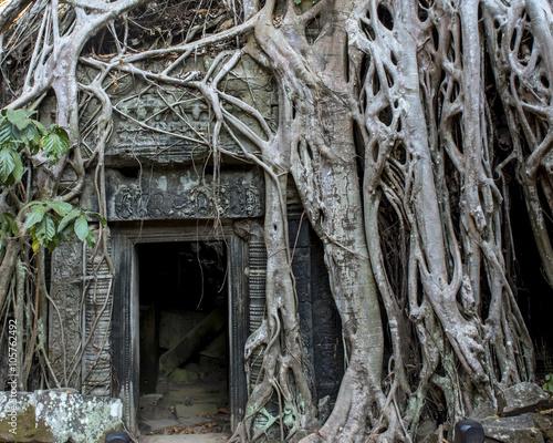 Foto op Plexiglas Bedehuis Strangler Fig tree growing over Ta Prohm, Cambodia