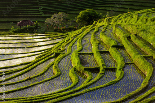 Fotobehang Rijstvelden Green Terraced Rice Field in Bali, Indonesia