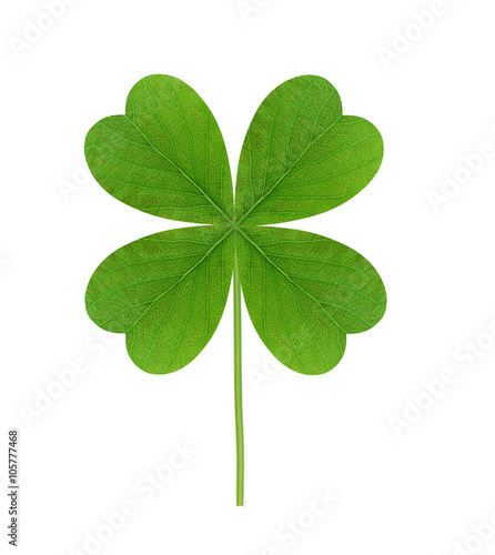 Leaf of clover isolated on white background
