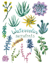 Set Of Watercolor Succulents
