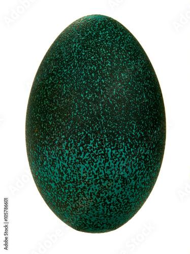 egg emu
