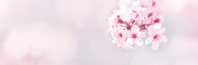 Spring Tree Blossom Background
