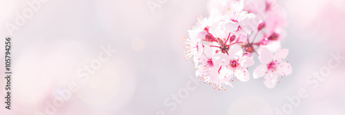 Spring tree blossom background