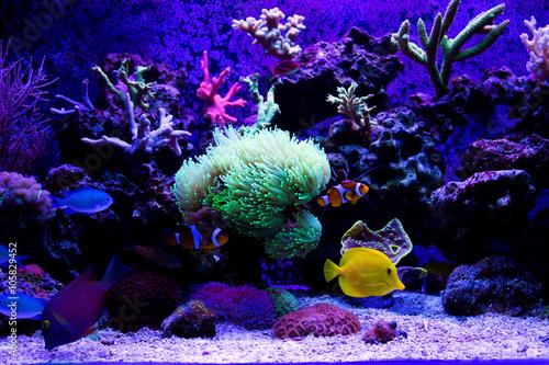 Poster Sous-marin Coral reef aquarium scene