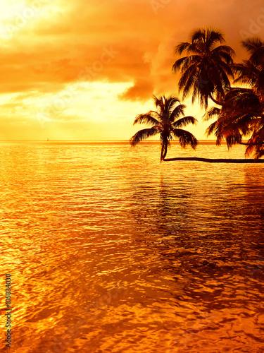 Obrazy na płótnie Canvas Tropical coconut palm tree sunset