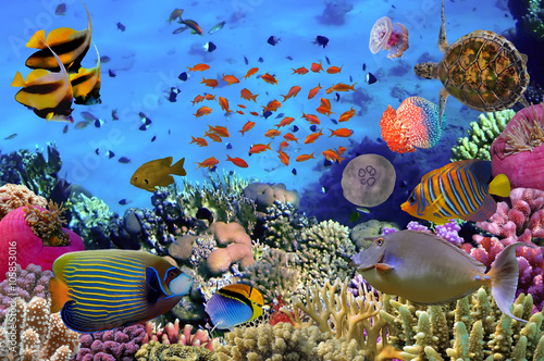 Colorful coral reef with many fishes and sea turtle. Red Sea