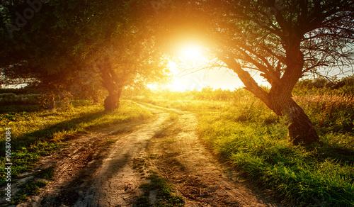Aluminium Prints Autumn rural road at sunset in the woods