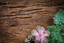 Arrangement Of Succulents Or Cactus On Wooden Background As Fram