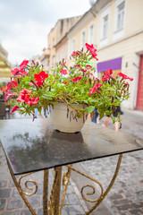 Fototapeta na wymiar flowers on the street