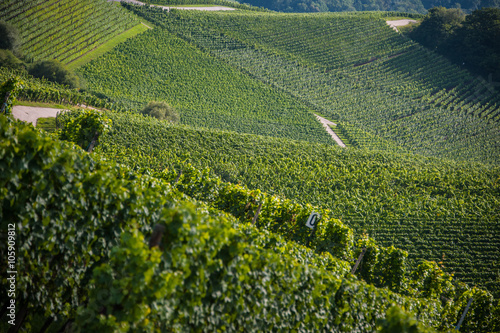 Wine Moselle Luxembourg - 105909812